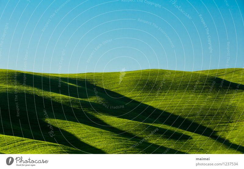 Lange Schatten in der Toskana Ferien & Urlaub & Reisen Sonne Landschaft Wolkenloser Himmel Horizont Frühling Schönes Wetter Gras Wiese Hügel Linie ästhetisch