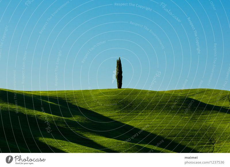 Eine einsame Zypresse in grünen Toskanawiesen Ferien & Urlaub & Reisen Sonne Natur Landschaft Wolkenloser Himmel Horizont Frühling Baum Gras Wiese Feld Hügel