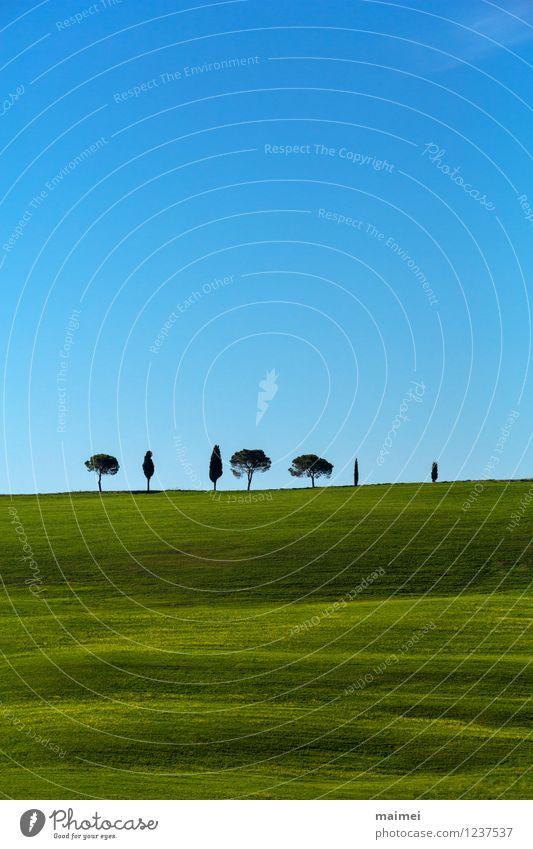 Sieben einsame Bäume in grünen Toskanawiesen Ferien & Urlaub & Reisen Freiheit Sonne Landschaft Wolkenloser Himmel Horizont Frühling Schönes Wetter Baum Gras