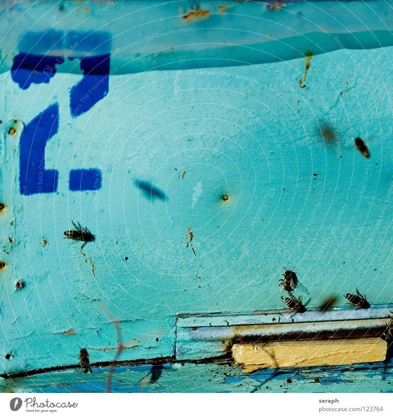 Bienenstock Tier Holz fliegen wild Wildtier Insekt Holzbrett fliegend König ansammeln fleißig Honig Bienenwaben Russland emsig