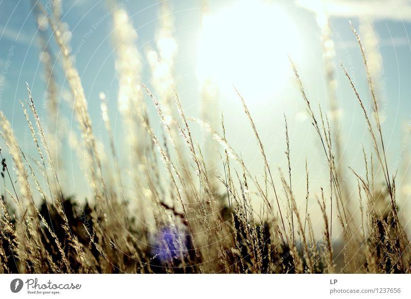 Sonnenuntergang im Weinberg Umwelt Natur Landschaft Pflanze Urelemente Erde Feuer Luft Himmel Wolkenloser Himmel Sonnenaufgang Sonnenlicht Frühling Sommer