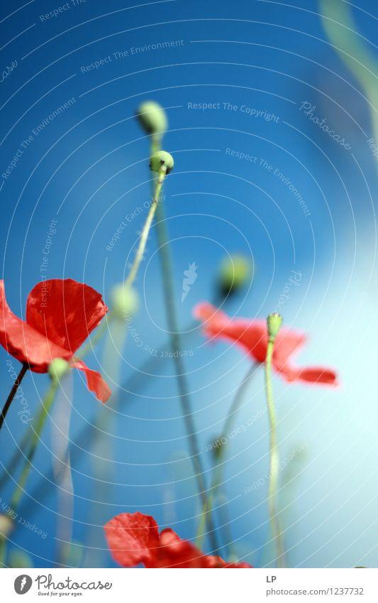 Himmel Natur blau Pflanze schön Sommer Blume rot Landschaft Umwelt Wärme Frühling Blüte Wiese feminin Garten