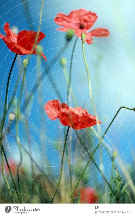 123 Himmel Natur Pflanze schön Sommer rot Landschaft Umwelt Wärme Frühling Blüte Wiese feminin Garten Horizont Park