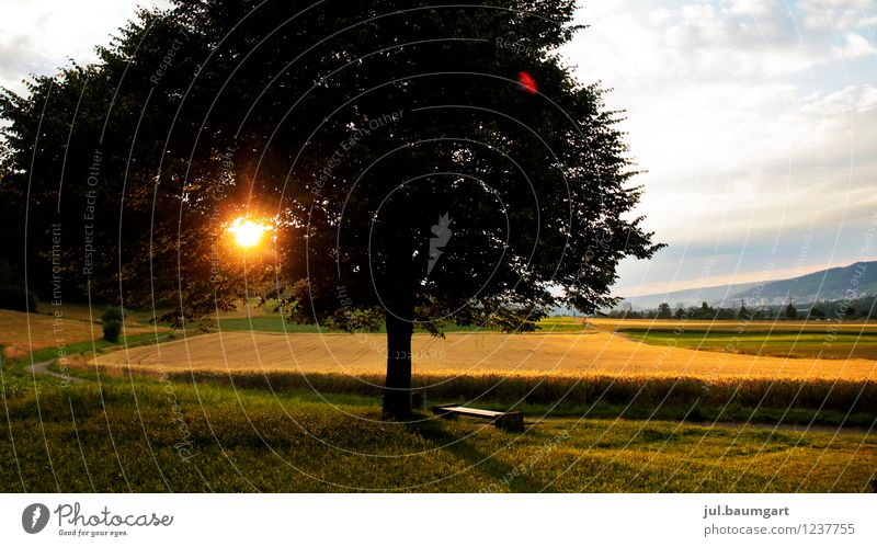 Killwangen Sonnenuntergang Natur schön Sommer Baum Einsamkeit Landschaft Wolken Ferne gelb Wärme Leben Gras Feld Idylle gold