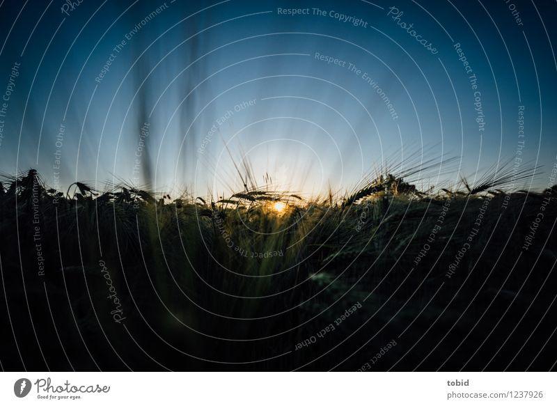 Spreedorado | Sunset Himmel Natur Pflanze Sommer Erholung Landschaft Ferne Freiheit Horizont Feld leuchten Idylle ästhetisch Schönes Wetter einzigartig Getreide