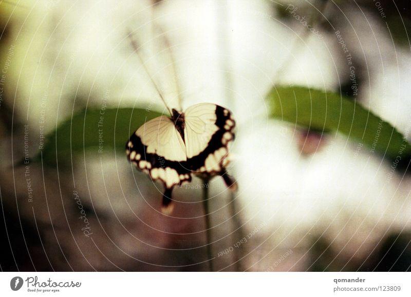 Motion Schmetterling Blume Blatt rot weiß grün Tiefenschärfe Makroaufnahme Frühling Sommer Fühler Nahaufnahme schön orange Natur exotisch Flügel