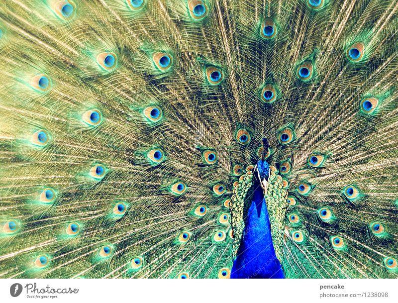 augenaufschlag Tier 1 Zeichen außergewöhnlich Bekanntheit elegant exotisch fantastisch schön verrückt ästhetisch Erwartung Erotik Kraft Pfau Rad Auge