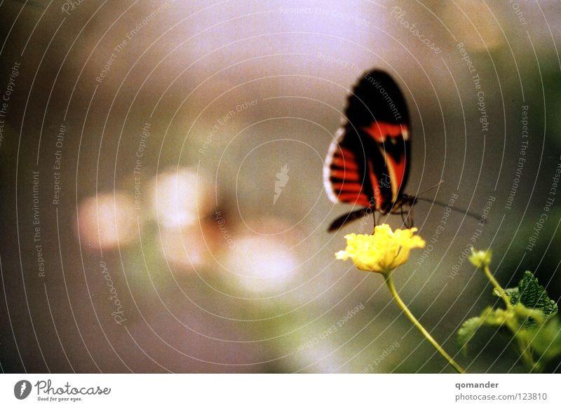 Ruhe Natur schön weiß Blume grün rot Sommer Frühling orange Flügel Schmetterling Tiefenschärfe exotisch Fühler Tier