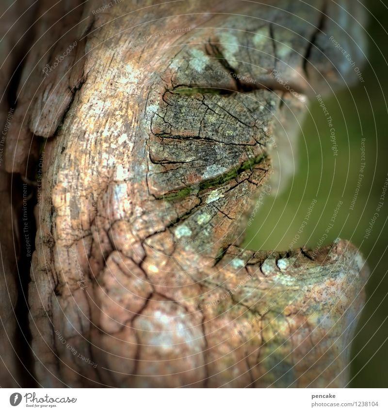 mumie Natur grün Einsamkeit dunkel Gefühle Tod grau braun träumen Zeichen trocken Gebiss gruselig Riss vergessen Sumpf