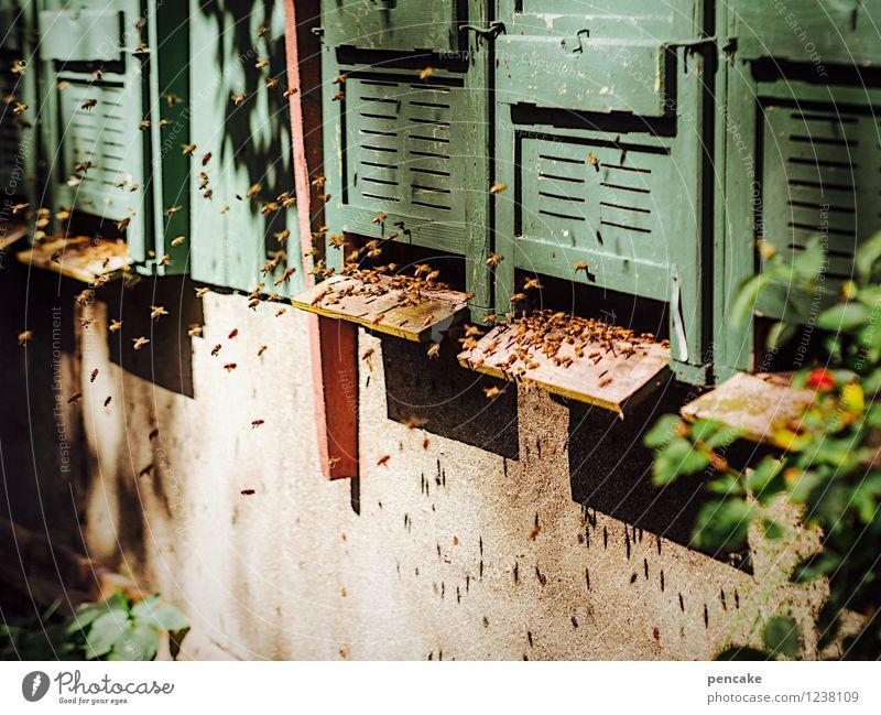 spreedorado | er·volk·reich Natur grün Sommer Tier Haus natürlich Garten Arbeit & Erwerbstätigkeit Wildtier Erfolg fantastisch Kultur Zeichen Völker Verstand Schrebergarten