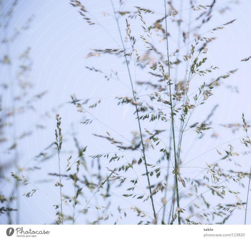 Hyposensibilisierung... Himmel blau grün Sommer Freude Wiese Wärme Gras liegen Physik Weide Halm Samen Grasland Pollen Spritze
