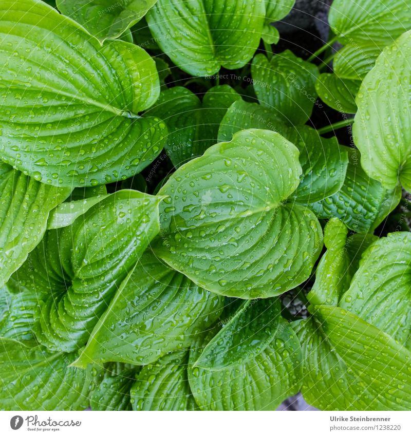 Vielfältig mit Feuchtigkeitscreme Natur Pflanze grün Sommer Wasser Blume Blatt natürlich Garten Linie Regen glänzend Wachstum Wassertropfen nass weich