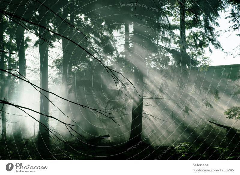 Luftdurchlässig Ferien & Urlaub & Reisen Ausflug Abenteuer Umwelt Natur Sonnenaufgang Sonnenuntergang Sonnenlicht Pflanze Baum Wald Umweltschutz Farbfoto