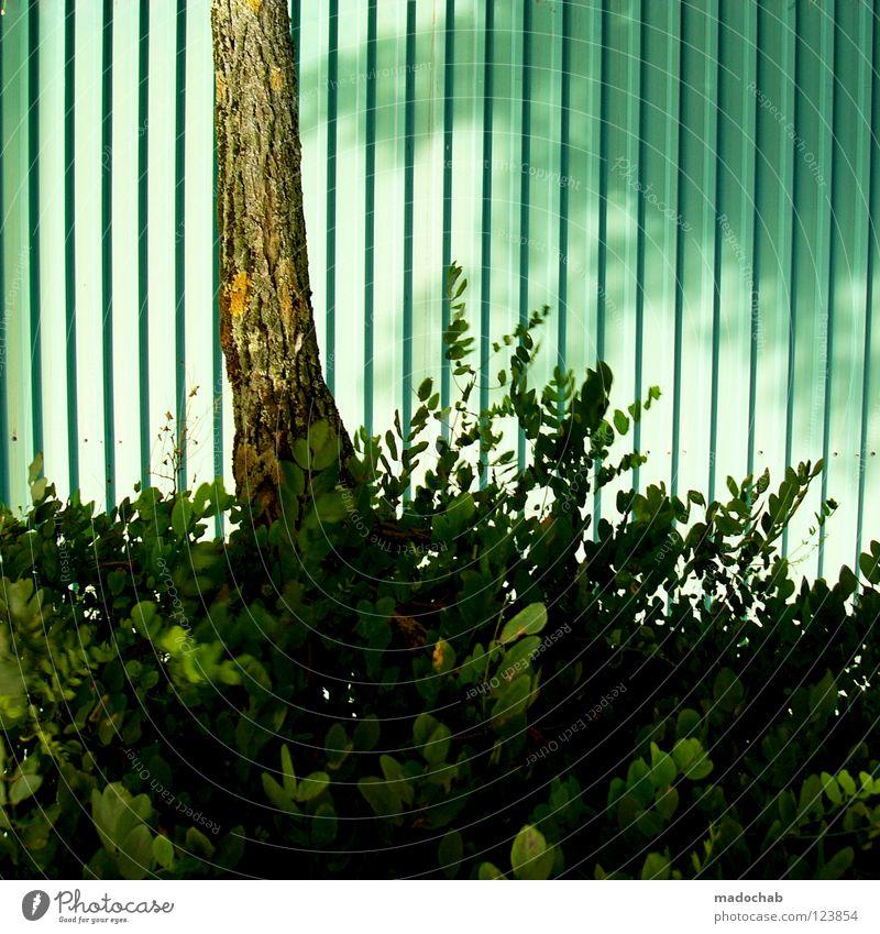 ONE-80-TREE Natur grün Baum Pflanze Blatt türkis Baumstamm trashig Kopfstand Garagentor