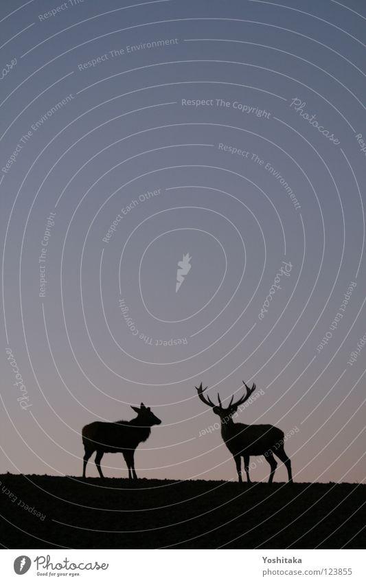 Zweisame Einsamkeit Silhouette Himmel ruhig Liebe Einsamkeit Tier 2 Zusammensein Tierpaar Horizont paarweise Kommunizieren Frieden Unendlichkeit Partner Säugetier
