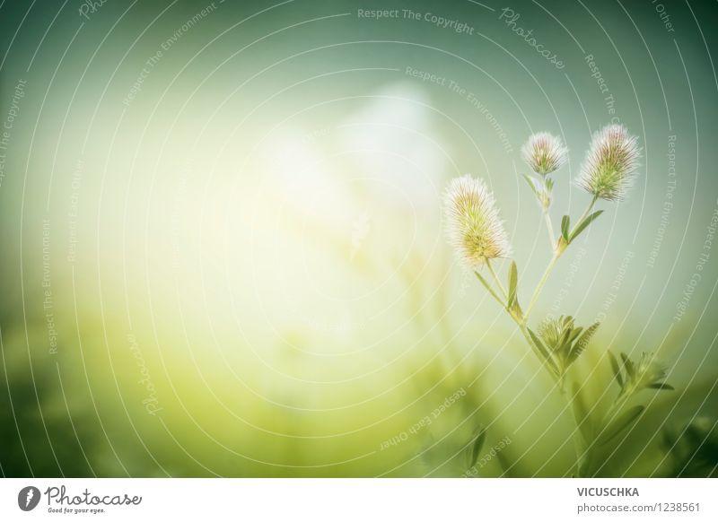 Grüne Wiese im Morgen Nebel Lifestyle Design Freizeit & Hobby Sommer Garten Umwelt Natur Pflanze Sonnenlicht Frühling Herbst Schönes Wetter Wildpflanze Park