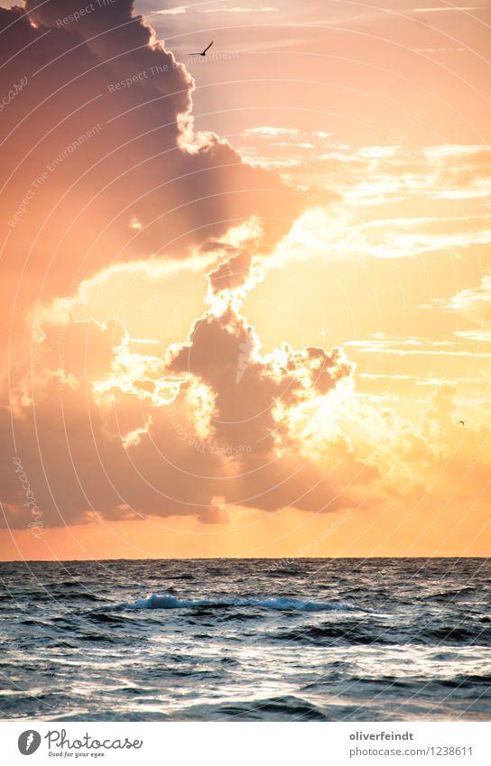 Sonnenaufgang III Himmel Natur Ferien & Urlaub & Reisen Sommer Meer Wolken Ferne Strand Umwelt Küste Freiheit Horizont Freizeit & Hobby Wetter Tourismus