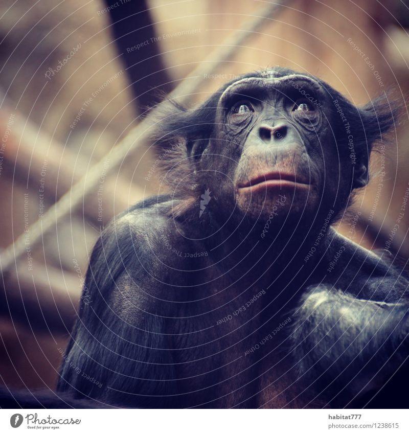 spiegelbild feminin Natur schwarzhaarig Tier Fell 1 sitzen Farbfoto Innenaufnahme Totale Blick nach oben