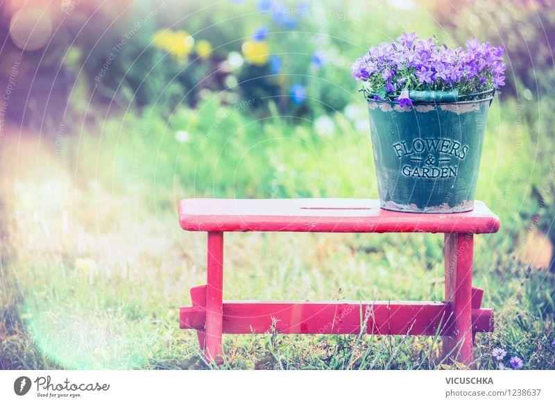 Glockenblumen in altem Eimer auf altem Hocker Stil Design Freude Sommer Garten Stuhl Natur Pflanze Sonnenlicht Frühling Herbst Schönes Wetter Blume Blüte