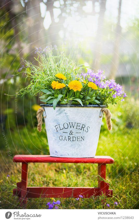 Garten und Blumen Dekoration Natur Pflanze Sommer Blatt Frühling Blüte Stil Lifestyle Park Design Freizeit & Hobby Dekoration & Verzierung Schönes Wetter Stuhl