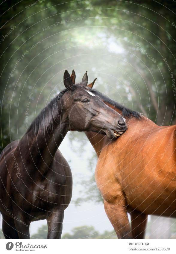 Warmblut Pferde Paar Natur Sommer Baum Tier Frühling Liebe Gefühle Auge Herbst Stimmung Zufriedenheit Design Tierpaar Lebensfreude Schönes Wetter Pferd