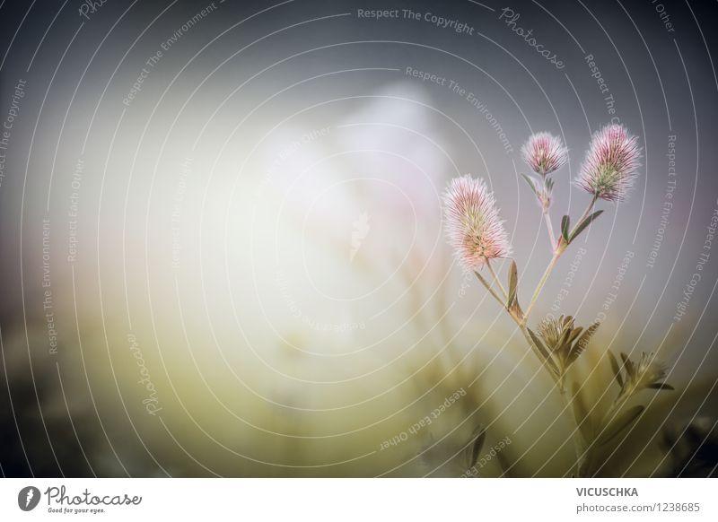 Hasen Klee in Morgendämmerung Stil Alternativmedizin Sommer Umwelt Natur Pflanze Frühling Herbst Nebel Blatt Blüte Garten Park Wiese retro gelb Design