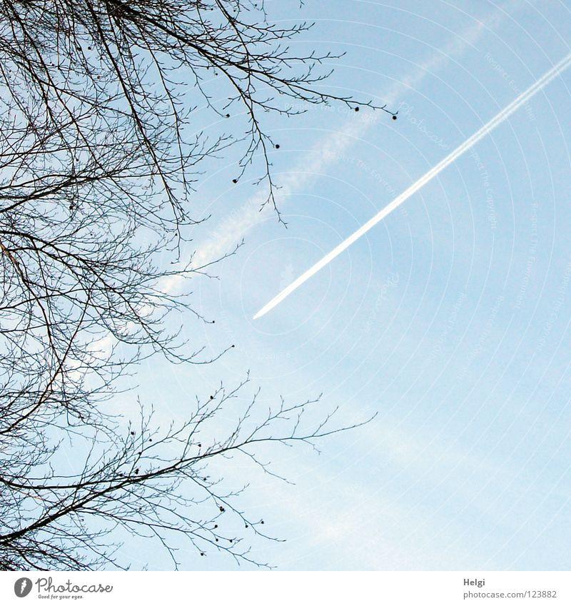 parallel... Flugzeug Ferien & Urlaub & Reisen Streifen Baum lang dünn krumm Buche Buchecker Wolken weiß braun Kondensstreifen Abgas Smog Umweltverschmutzung