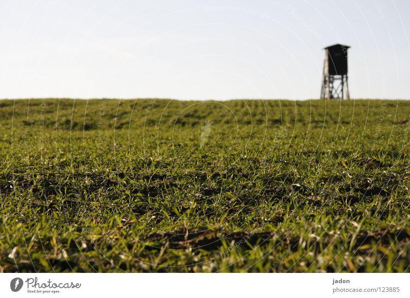 Karnickel-Perspektive Himmel Pflanze Gras Feld Angst warten Jagd Säugetier Jäger Brandenburg Hochsitz Opfer Gewehr Erdmaus