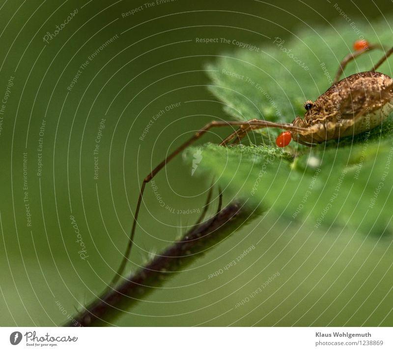 Handicap Natur Pflanze grün Sommer Blatt Tier Wald Umwelt Herbst Wiese Garten braun Park orange sitzen Krankheit