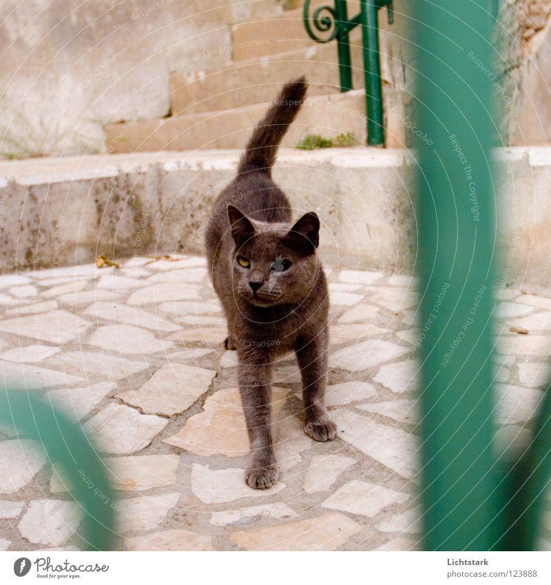 musste sein - sorry schwarz Tier Katze Wut Vergangenheit Verkehrswege Ärger Erfahrung Hauskatze Kämpfer Steinboden