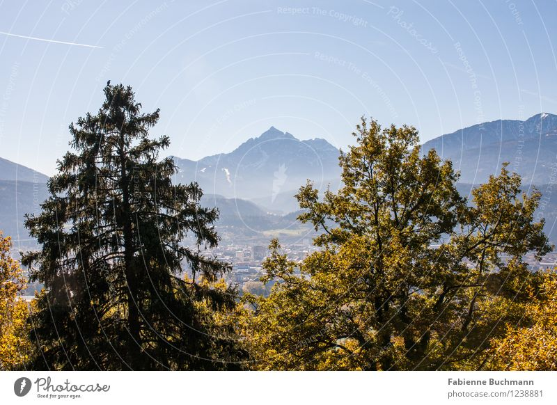 Über Innsbruck Natur Landschaft Pflanze Wolkenloser Himmel Sonnenlicht Herbst Schönes Wetter Baum Wald Alpen Berge u. Gebirge blau gelb grün orange Alpenzoo