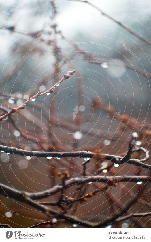 ... fühlen uns wie Regen Baum blau rot ruhig Wolken dunkel kalt Denken braun Wassertropfen nass Sträucher Ast Gewitter feucht