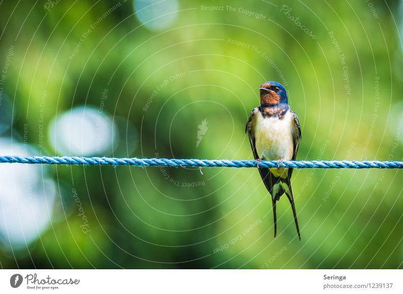 Schöner Ausblick ( Rauchschwalbe ) Natur Pflanze Sommer Tier Garten fliegen Vogel Park Flügel Tiergesicht