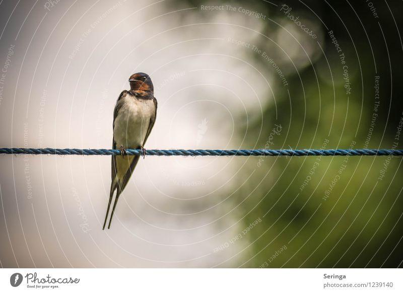 In Balance Himmel Natur Sommer Sonne Landschaft Tier Garten fliegen Vogel Park Luft Flügel Tiergesicht Rauchschwalbe
