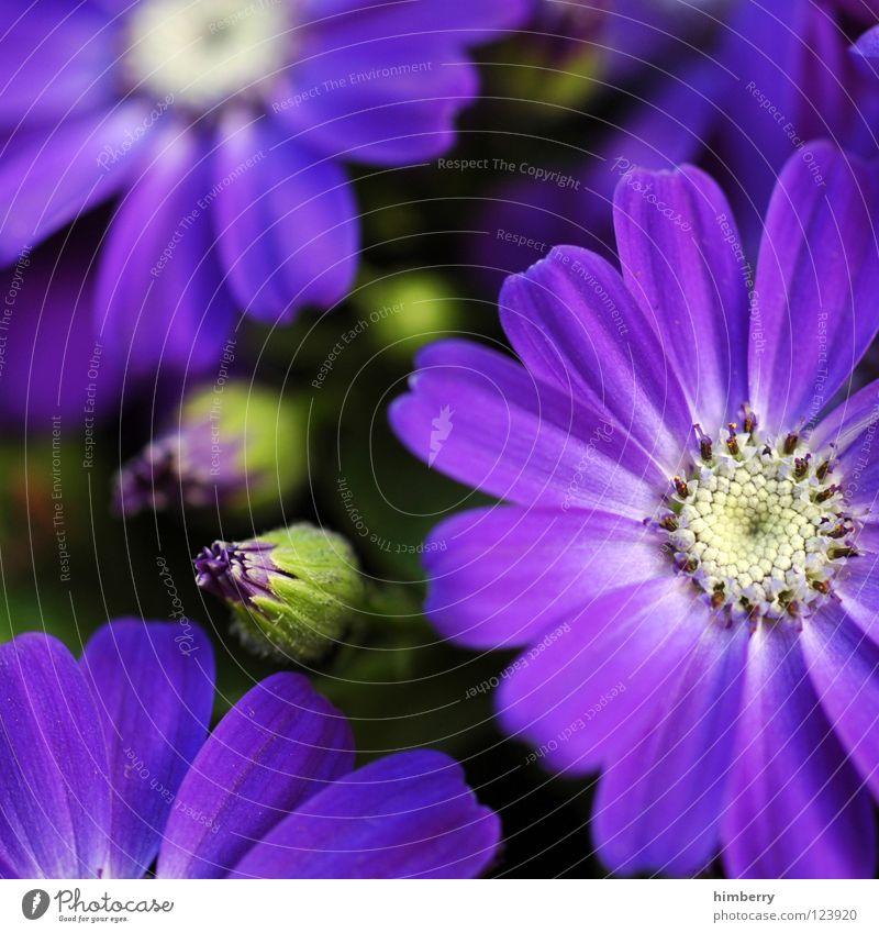 sun seekers Blume Blüte weiß Blütenblatt Botanik Sommer Frühling frisch Wachstum Pflanze violett Hintergrundbild Park Makroaufnahme flower Detailaufnahme