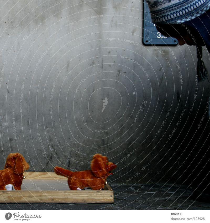 ZWEI HUNDE, EIN PROBLEM Hund Tier Liebe sprechen Spielen oben Holz Mauer Stil träumen 2 braun Zusammensein dreckig laufen Beton