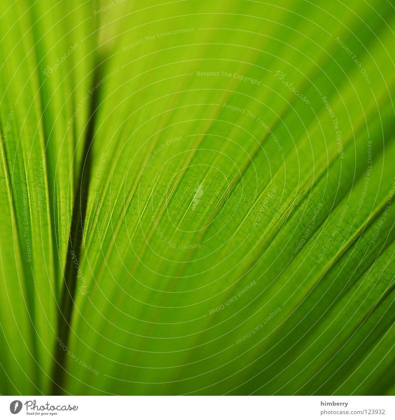 jungle hunt Natur Ferien & Urlaub & Reisen grün Strand Blatt Küste Park Hintergrundbild frisch Urwald Cocktail Botanik Florida Bahamas