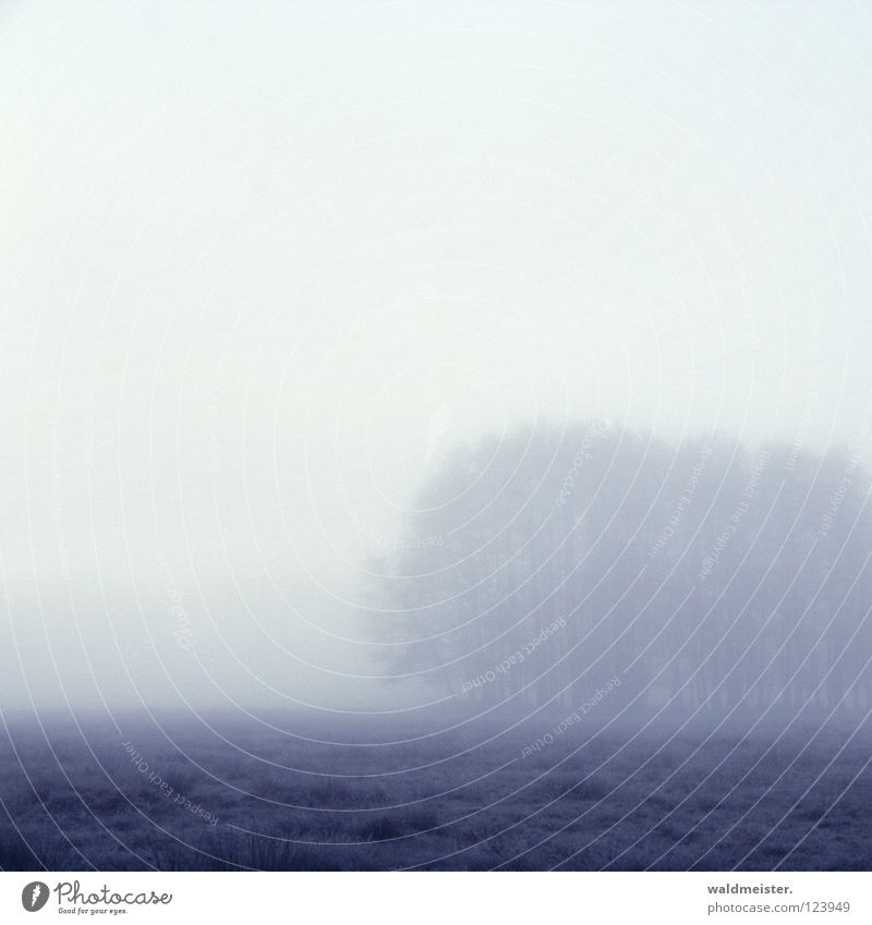 Nebel Baum Wald Morgen Morgennebel Wolken Herbst kalt Romantik Morgendämmerung Müritz-Nationalpark Traurigkeit