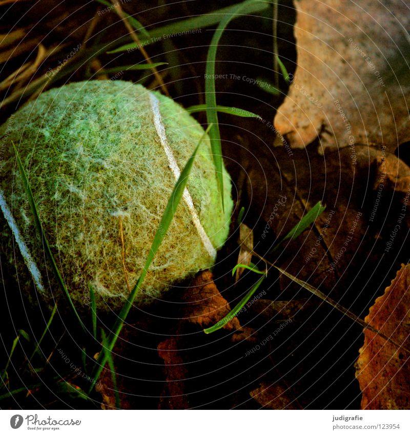 Verspielt Tennis Tennisball Spielen Spielzeug Hund verloren Gras Wiese Blatt apportieren Suche grün Farbe Ball verstecken werfen