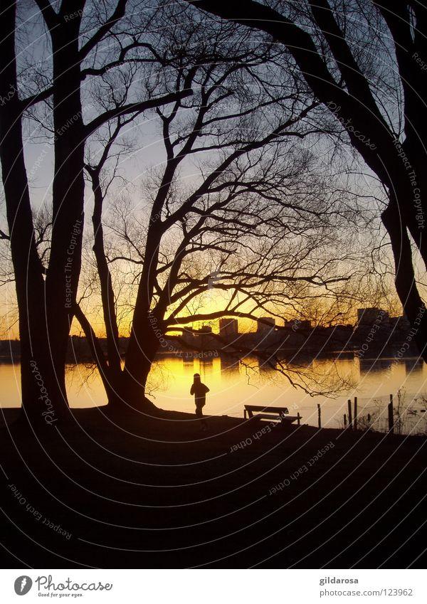 7:15 Uhr Sonnenaufgang Außenalster Alster Jogger Farbverlauf Baum laublos Parkbank Morgen Dämmerung Aussicht Hochhaus Joggen Stadt Alsterlauf Hamburg Farbe