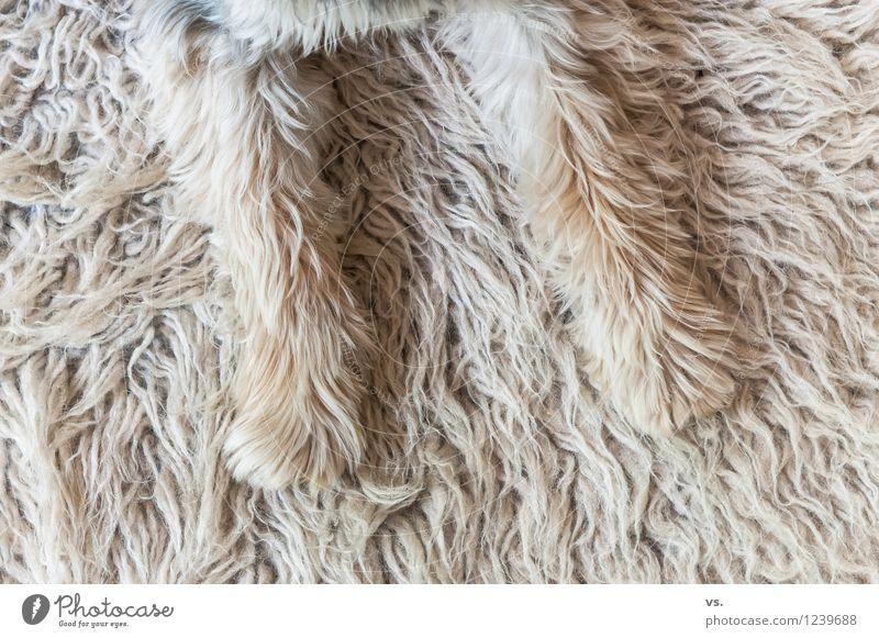 Pfoten weg! Tier Haustier Hund Fell 1 Fernsehen schauen genießen liegen Häusliches Leben listig lustig rebellisch klug Sicherheit Schutz Geborgenheit Einigkeit