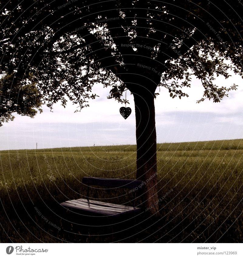 beherzter Baum grün Liebe Wiese Glück Herz Bank Romantik verheiratet