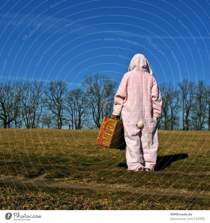 HasenMission | 2008 - orientieren Mensch Himmel Natur blau weiß schön Baum Freude Einsamkeit Tier Wiese Holz Gras Wärme Wege & Pfade Denken
