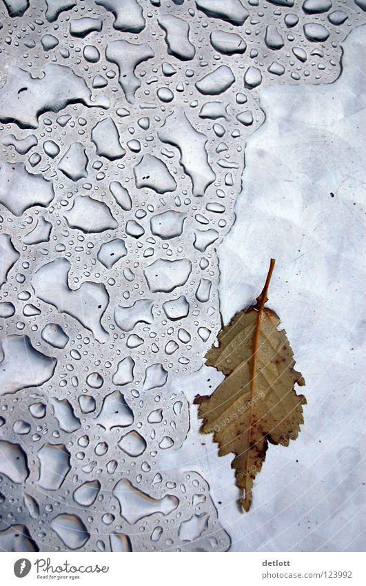herbsttropfen Blatt Herbst Wassertropfen nass kalt Jahreszeiten Licht Muster Vergänglichkeit silber Kontrast reflektion Wetter Regen ungemütlich detlott