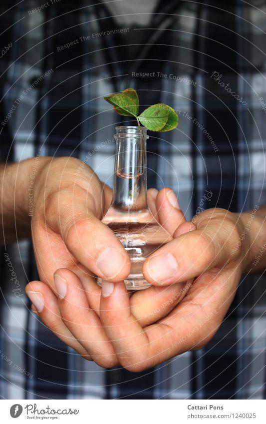 Glück Hand Natur Pflanze Wasser Blatt Klee Kleeblatt festhalten Wachstum ästhetisch Flüssigkeit natürlich Originalität positiv blau grün Vertrauen Sicherheit