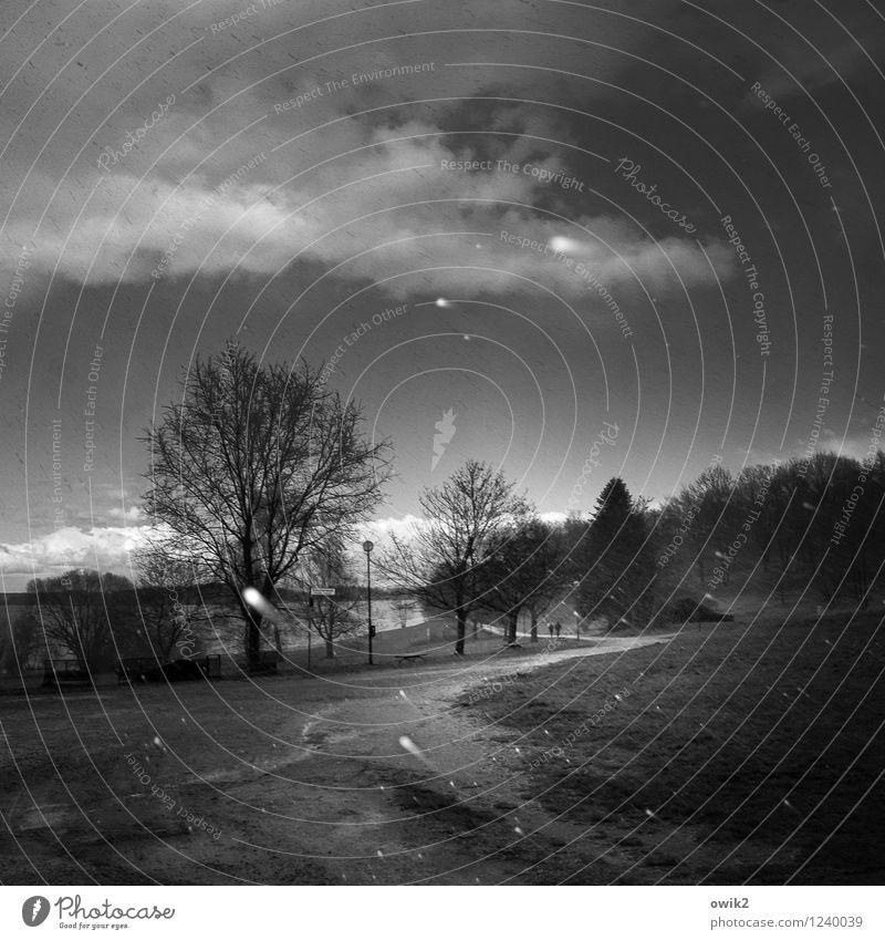 Strandpromenade Paar 2 Mensch Umwelt Natur Landschaft Pflanze Himmel Wolken Horizont Winter Klima Wetter Unwetter Schnee Baum Gras Wald Seeufer Wege & Pfade