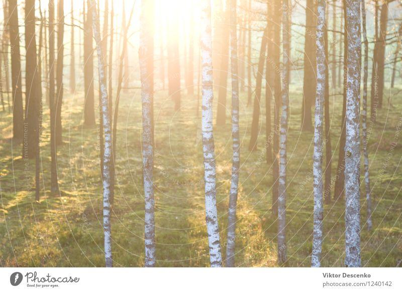 Wald auf dem Hintergrund der Strahlen der Sonne im Frühjahr schön Sommer Umwelt Natur Landschaft Pflanze Herbst Baum Blume Blatt Park frisch natürlich grün