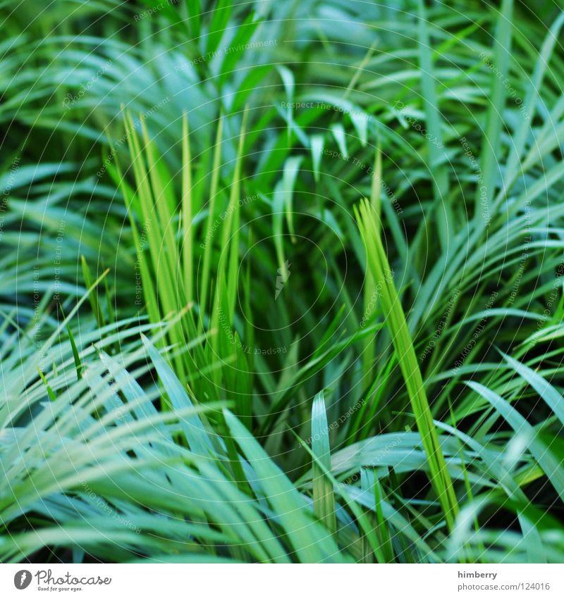 george bush grün Florida Botanik Urwald Hintergrundbild Park Cocktail Bahamas Strand Ferien & Urlaub & Reisen frisch Pflanze Wachstum Küste jungle jungel leaf