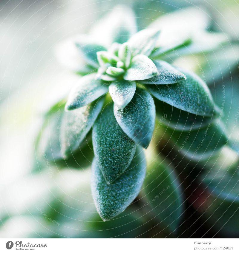 pusherama Blatt grün Florida Botanik Baum Sträucher Hintergrundbild Park Ferien & Urlaub & Reisen frisch gedeihen Wachstum Gärtner Pflanze Makroaufnahme