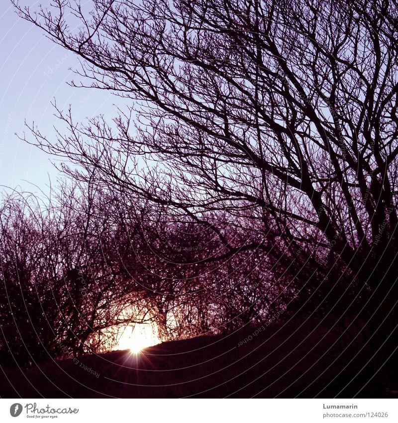 Nachtversteck schön Himmel Baum Sonne Winter dunkel Wärme Graffiti Kraft glänzend gehen schlafen Hoffnung Energiewirtschaft Sträucher